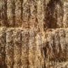 200 m/t of Barley Hay 8x4x3 Bales