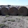 Oaten hay for sale 100 - 5x4 rolls. 2019 season - Sold Per Bale
