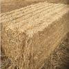 Wheaten Straw Long Windrowed 8x4x3 x 500 KG Bales