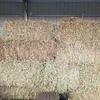 Oaten Hay Small Bales x 250
