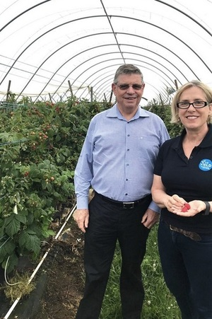 Ag Tech Sunday - Costa Group invest heavily in The Yield sensor technology