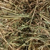 Oaten Hay Small Squares approximately 1000 Bales - SOLD BY THE BALE