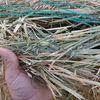Oaten Hay 440 kg rolls 9.4ME 53% NDF
