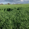 Standing Oaten & Rye Hay For Sale - Expressions of Interest