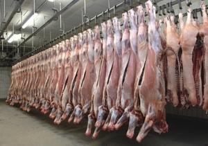 MLA Boss Richard Norton tipping $9-$10/kg Lamb prices