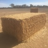 Barley Straw Very Good Colour & HighDdensity Baler Being Used 8x4x3
