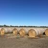 Barley Hay in 5x4 Rolls