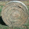 35 x Lucerne Rolls For Sale -  to be moved this week