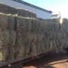 Teff Grass Hay