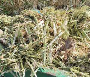 Canola Hay - 250mt available