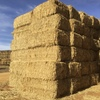 Large Tonnage Export Surplus Oaten Hay For Sale in 8x4x3's