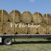 295 Vetch Hay Rolls