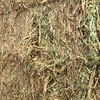 New Season Vetch Hay For Sale in 8x4x3's - Around 640 - 670Kgs / Bale