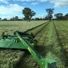 400m/t Balansa Clover Hay 700kg Approx. 8x4x3 Bales ex farm
