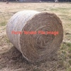200 Rolls of Pasture Hay Wanted