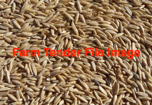 Yallara Oats Wanted in Bulk or Bagger upto 25mt