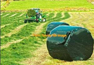 Italian Rye/Clover Silage
