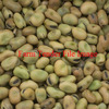 100mt of Feed Grade Fiesta Faba Beans For Sale Ex Farm