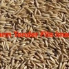 Cleaned Oats For Sale