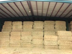 Wheaten hay