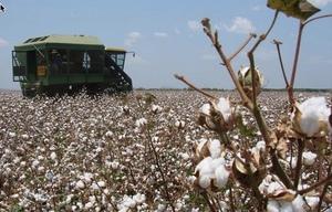 Cotton Australia's defence against 4 Corners report