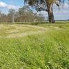 Clover/Ryegrass 70/30% Hay 8x4x3 - 600 x 580 KG Approx Bales