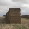 1100mt Barley Straw 500kg 8x4x3 Bales