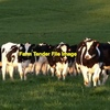 Wanted Young X Bred Heifers