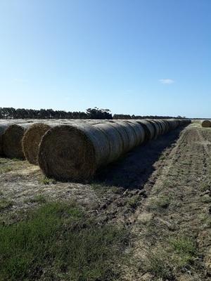 Under Auction - Oaten hay for sale 100 - 5x4 rolls. 2019 season - Sold Per Bale