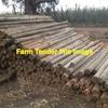 4500 x 12ft x 4inch Broken Pine Posts