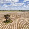 $3500/acre at Mundulla, SA