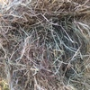 Rye Grass hay for sale in 8/4/3's covered