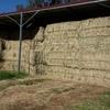 New Season Lucerne & Rye grass hay