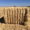Straw 500 - 700kg bales Shedded