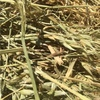 Barley / Mixed Cereal Hay For Sale in 8x4x3's