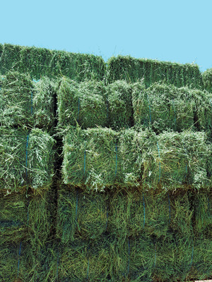 High quality Clover & Oaten Hay small bales