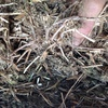 Vetch Hay For Sale in 8x4x3's - Shedded - See Test
