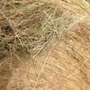 New Season 5x4 Rolls Pasture Hay