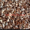 Almond Hulls Milled Or Whole Delivered Goulburn Valley area