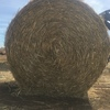**Price Reduction** Wheaten & Barley Straw Rolls Net Wrapped 1,000 x 330 KG Approx Rolls + Freight