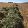 160mt Vetch Hay 650kg 8x4x3 HD Bales (New Season)