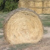 150 bales - Pasture Hay - available 120 of which are in the shed.