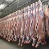 Mecardo Analysis - Making lamb exports great again