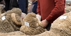 Presidents welcome - Australian Sheep and Wool Show starts later this week