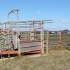 Cattle Yards for Removal