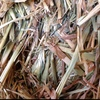 Oaten Hay Small Squares For Sale