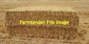 200 x Barley Straw 8x4x3 Bales