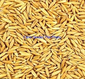 11mt Matika Oat Seed Cleaned/Graded