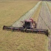 MacDon M155 2012 Model Windrower / Swather For Sale