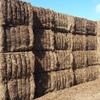 New Season Vetch Hay   ### ONO ###